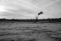 Brughiera desolata nell'inverno Fotografia Stock