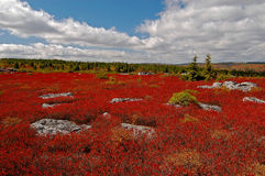 Brughiera di autunno a Dolly Sods Wilderness Fotografie Stock