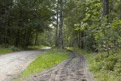 Brughiera di Luneburg - Skidmarks in una pista Fotografie Stock Libere da Diritti