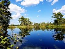 Brught blå himmel royaltyfria bilder