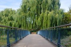 Brugweg met bomen Royalty-vrije Stock Foto