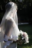 Bruid Stock Afbeeldingen