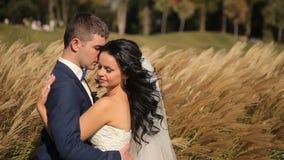 Bruid en bruidegom die in park, het kussen lopen stock footage