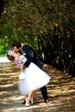 Bruid en bruidegom in het park Stock Afbeeldingen