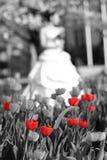 Bruid en rode tulpen stock afbeeldingen