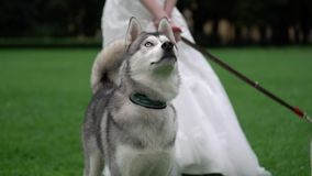 Bruid met schor honden stock videobeelden