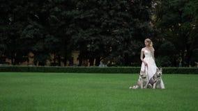 Bruid met schor honden stock video
