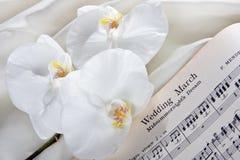 Bruids orchideeën royalty-vrije stock fotografie