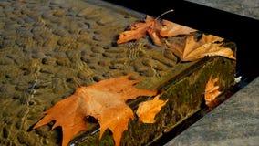 Bruin Autumn Leaves in Drijvend Water stock videobeelden