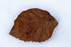 Bruin blad op sneeuw Royalty-vrije Stock Afbeelding