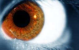 Bruin blauw oog stock afbeelding