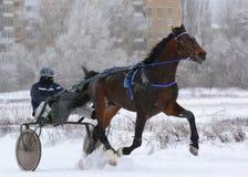 Bruin de draverras van paardorlov in motie Stock Foto's
