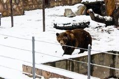 Bruin draag bij de dierentuin stock afbeeldingen