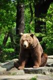 Bruin draag bij de dierentuin Royalty-vrije Stock Fotografie