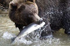 Bruin draag en vis Stock Afbeelding
