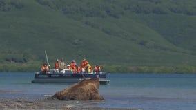 Bruin draag proberend om een vis te vangen Eco-toerisme, een rondleiding stock videobeelden