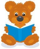 Bruin draag welp lezend een boek Stock Fotografie