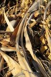 Bruin Droog Gras Herb Texture Royalty-vrije Stock Foto's