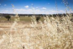 Bruin droog gras met omheining Royalty-vrije Stock Afbeeldingen