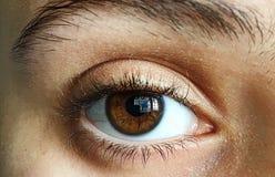 Bruin en groen oog Stock Foto's