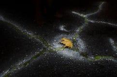 Bruin esdoornblad bij nacht Stock Afbeelding
