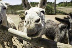 Bruin ezelslandbouwbedrijf Stock Foto's
