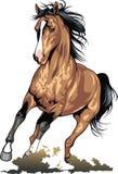Bruin geïsoleerd paard Stock Foto's