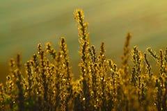 Bruin gras royalty-vrije stock afbeelding
