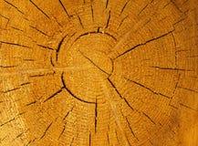 Bruin groot cirkelstuk als achtergrond van houten dwarsdoorsnede met de textuurpatroon en barsten van de boomring De achtergrond  royalty-vrije stock foto