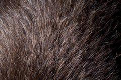 Bruin haar. Royalty-vrije Stock Fotografie