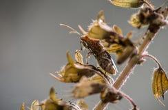 Bruin insect op een droge, bruine stomp met een vage achtergrond royalty-vrije stock fotografie