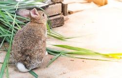 bruin konijn Royalty-vrije Stock Foto's
