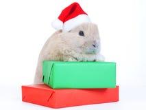 Bruin konijn in van santahoed en Kerstmis dozen, ISO Stock Fotografie