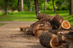Bruin Logboek, Stuk van hout Royalty-vrije Stock Foto