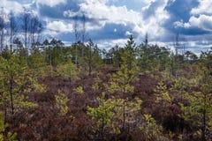 Bruin moeras met zijn flora royalty-vrije stock foto's