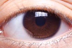 Bruin oog Stock Afbeeldingen