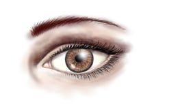 Bruin oog Stock Fotografie