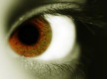 Bruin oog royalty-vrije stock foto
