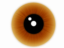 Bruin oog royalty-vrije stock fotografie