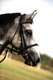 Bruin paard royalty-vrije stock foto's