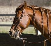 Bruin paard royalty-vrije stock afbeelding