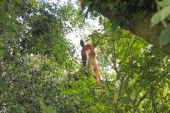 Bruin paard achter sommige bomen die van mensen met vliegen verbergen Royalty-vrije Stock Foto's