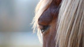 Bruin paard bij het weiden bij zonsondergang stock videobeelden