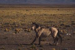 Bruin paard die in de vallei lopen royalty-vrije stock foto's
