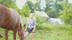 Bruin paard die gras eten en bij landelijk gebied lopen Vrouw die op haar letten stock footage