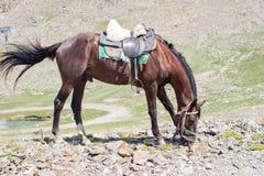 Bruin paard die gras op de rotsen eten Stock Fotografie
