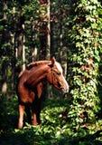 Bruin paard die in het bos lopen stock foto's