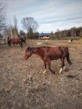 Bruin paard die van de dag genieten royalty-vrije stock afbeeldingen