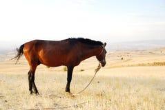 Bruin paard in een landbouwbedrijf Royalty-vrije Stock Foto's