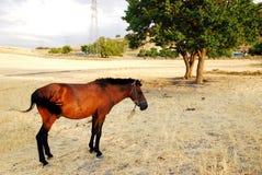 Bruin paard en een boom Royalty-vrije Stock Foto